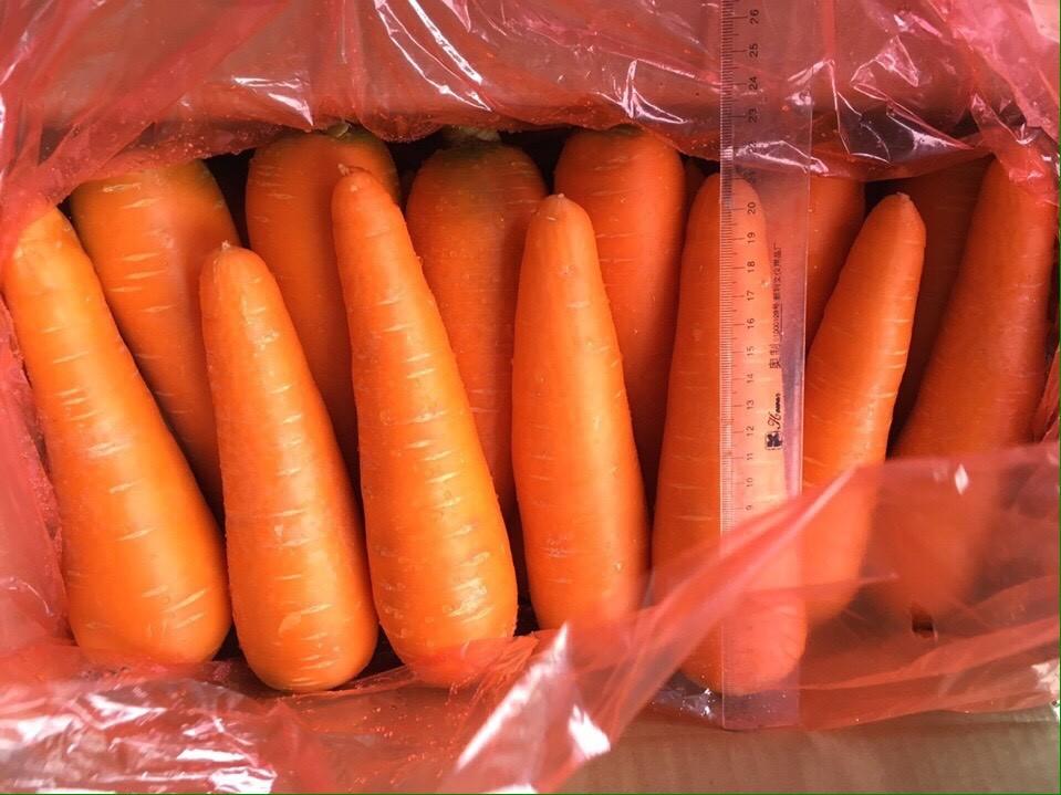 Price of fresh carrot in Vietnam size 2L best price, prompt shipment. Fresh carrot in Vietnam new crop.