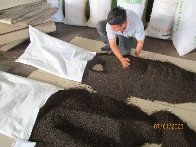 INCREASED PRICE OF VIETNAM BLACK PEPPER IN MAY/JUNE 2020