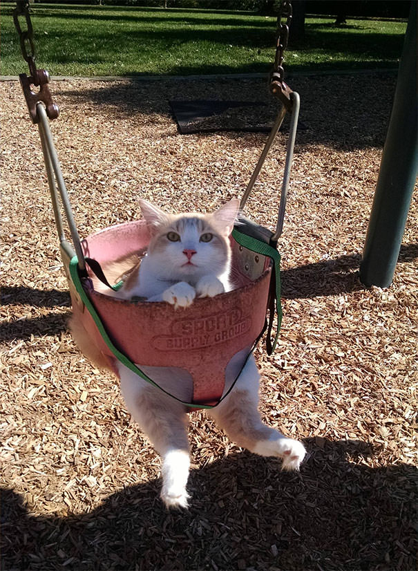 Not Only Was He Swinging, He Was On A Leash. The Most Patient Cat Ever