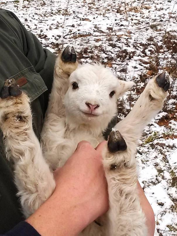 ¿Día difícil? 14 fotos ADORABLES de animales a los que les están rascando la pancita 😍