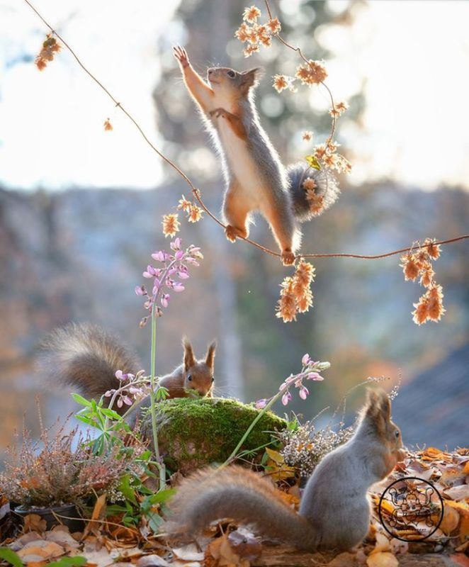 I Followed Squirrels Daily For 6 Years With My Camera And They Became My Friends
