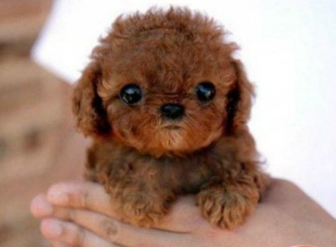 20+Mascotas peludas tan lindas que podrías confundirlas con peluches