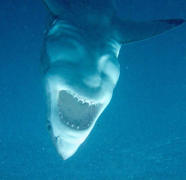A Shark Hanging Upside Down Looks Like Someone Laughing Maniacally