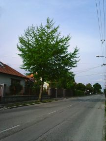 Photo3332