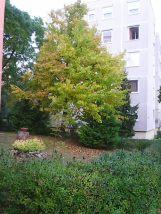 photo5476