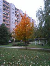 photo5582