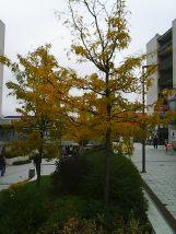 photo5667