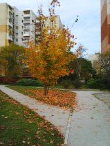 photo5968
