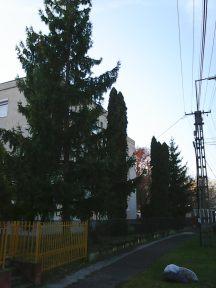 photo6140