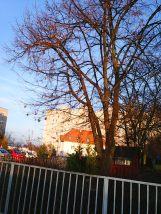 photo6203