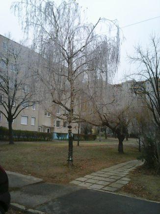 photo6693