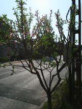 Photo7810