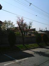 Photo7978