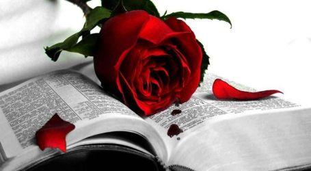 Un paseo entre libros y flores en Burjassot, para ganar un Ipad