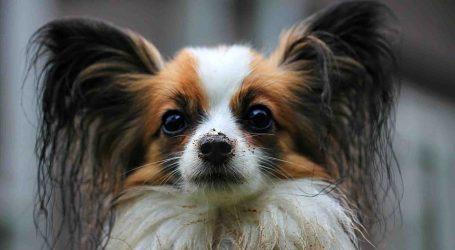Burjassot celebra este domingo el I Concurso Canino del municipio
