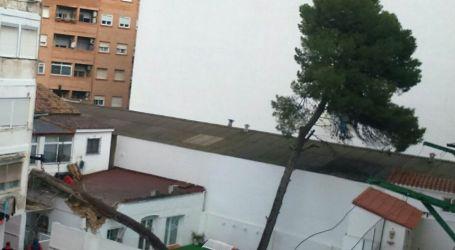 Cae un pino del patio de una guardería de Xirivella