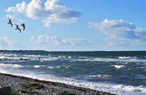sea, wave, gulls