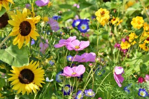 flower meadow, flowers, wildflowers