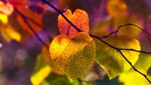 autumn leaves, mood, fall color