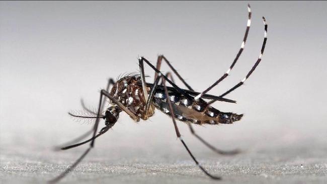 Dengue: 16 casos en la provincia 8