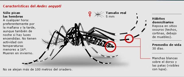 infodengue_mosquitoenfermedad_2