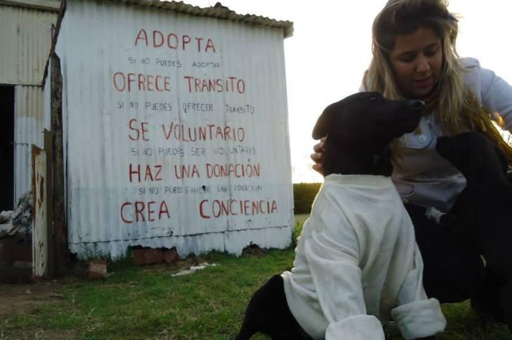 Animales callejeros: entre el rescate y el abandono 2
