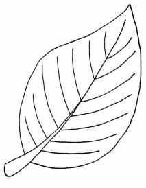 foglie39