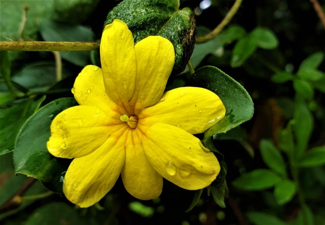 Plantas fascinantes: aprendiendo a valorarlas 1