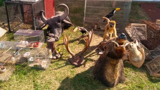 Se encontraron animales silvestres en una vivienda de Unquillo 5
