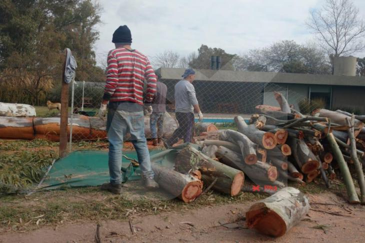La autorización de talar cuatro Eucaliptos generó enojo en Villa Allende 1