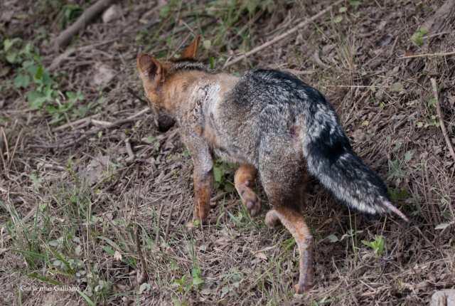 Invasión exótica: una amenaza que crece 7