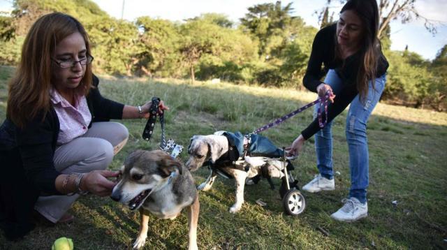 Invitan a adoptar animales discapacitados en Córdoba Capital 2