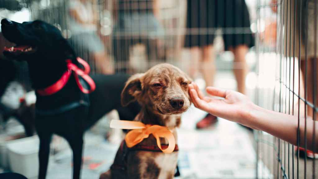 person touching brown puppy