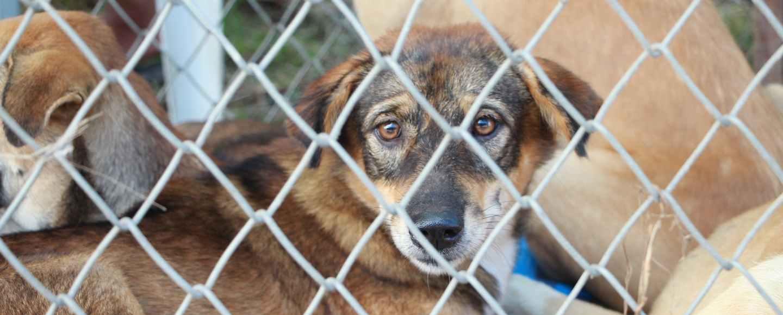 short coated tan dog inside fence