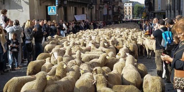 Fiesta de la trashumancia. Foto: Carlos Bouza