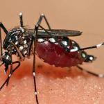 Primer caso de virus Zika en Madrid