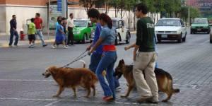 Multas excrementos perros