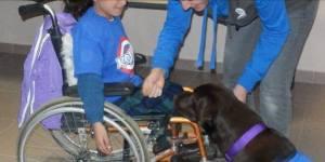 Terapias asistidas con mascotas. Foto: Cortesía Asociación Perros Azules.
