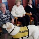 Las residencias de personas mayores introducen terapias con animales