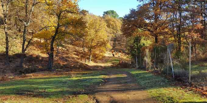 Pradera la Yedra ruta Castañar de El Tiemblo