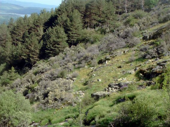 ruta senderismo san mamés chorrera buitrago lozoya