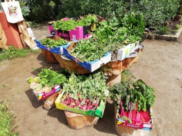 huertos urbanos cosechas solidarias