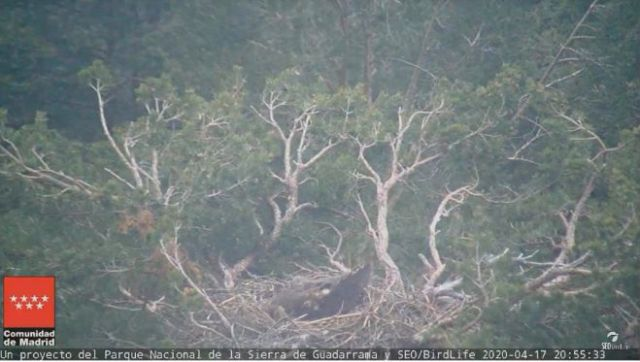 webcams sierra guadarrama Nido del buitre negro