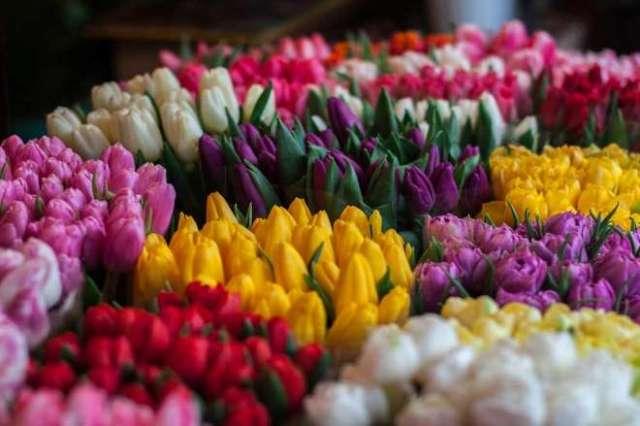 ramos flores cuidados