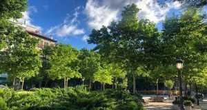 Proyecto Re-Planta Madrid