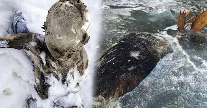 6 Descubrimientos y enigmas bajo el hielo que te sorprenderán
