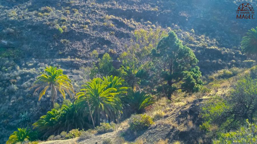 bosque guayedra