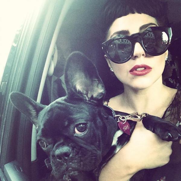 lady gaga y su perro