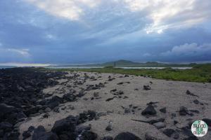 Foto de Paisaje con iguanas en Playa del Amor Isabela