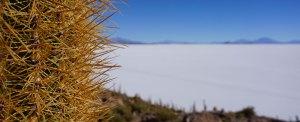 Vista de un cactus de cardon con la inmensidad blanca del Salar de Uyuni en segundo plano
